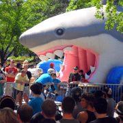 Shark Slide 2